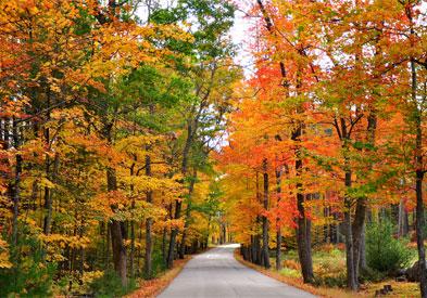 fall-foliage-393x275